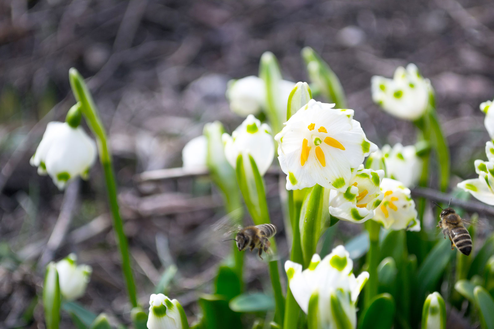 Kwiaty – najpiękniejsze, co może otrzymać kobieta bez okazji